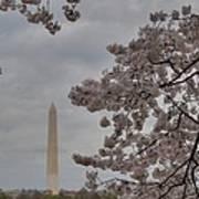 Washington Monument - Cherry Blossoms - Washington Dc - 011319 Poster by DC Photographer