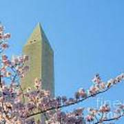 Washington Monument With Blossoms Poster