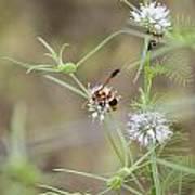 Wasp Variety Poster