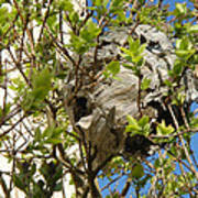 Wasps' Nest Poster