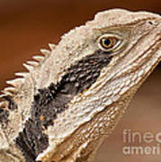 Water Dragon Close Up Poster