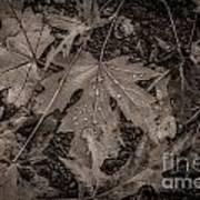 Water Drops On Fallen Leaves Poster