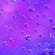 Water Drops On Purple And Blue Poster