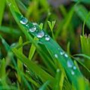 Water Drops On The  Grass 0014 Poster