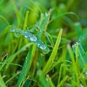Water Drops On The  Grass 0018 Poster