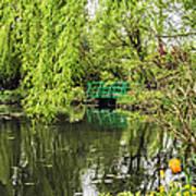 Water Garden Wonder Poster