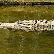 Water Gator Poster