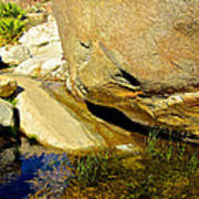 Water In Oasis On Borrego Palm Canyon Trail In Anza-borrego Desert Sp Campground-ca  Poster