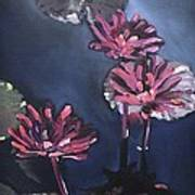 Water Lilies At Sunset Poster