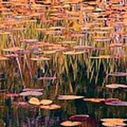 Water Lilies Re Do Poster