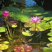 Water Lilly Garden Poster