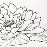 Water Lily Line Drawing Poster