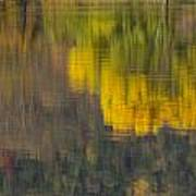 Water Reflections Abstract Autumn 2 B Poster