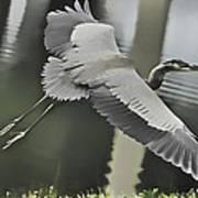 Waterbird Flying Poster