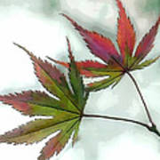 Watercolor Japanese Maple Leaves Poster