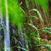 Waterfall Over Ferns Poster