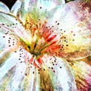 Waterflower Poster