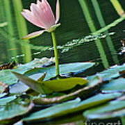Waterlily Whimsy Poster