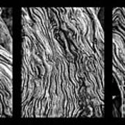 Weathered Wood Triptych Bw Poster