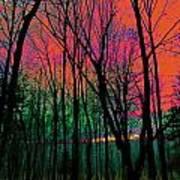 Webbs Woods Sunset Poster