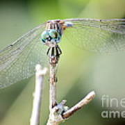 Welcome To My World Dragonfly Poster