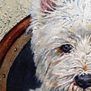West Highland Terrier Dog Portrait Poster