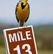 Western Meadowlark On The Mile 13 Sign Poster