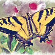 Western Tiger Swallowtail Papilio On Flower Poster by Robert Jensen