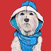 Westie In A Blue Slicker Poster