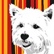 Westie With Stripes Poster