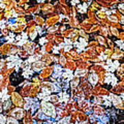 Wet Autumn Leaves Poster
