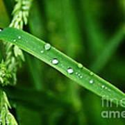 Wet Grasses Poster