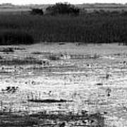 Wet Landscape Poster