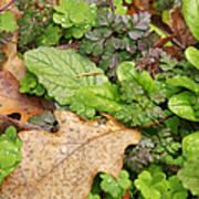 Wet Leaves Poster