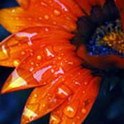 Wet Petals Poster