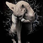 Wet Sphynx Poster
