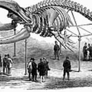 Whale Skeleton, 1866 Poster