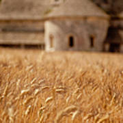 Wheat At The Abbaye Poster
