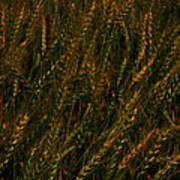Wheat Waving In The Wind Poster