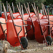Wheelbarrows In Garden Poster