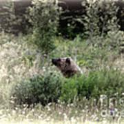 When Bears Dream Poster