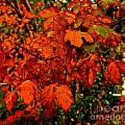 Where Has All The Red Gone - Autumn Leaves - Orange Poster