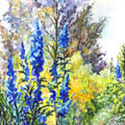 Where The Delphinium Blooms Poster