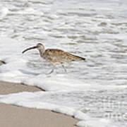 Whimbrel Wading Poster