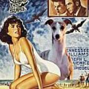 Whippet Art - Suddenly Last Summer Movie Poster Poster
