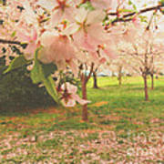Whispering Cherry Blossoms Poster