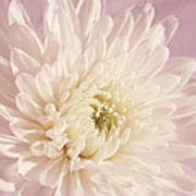 Whispering White Floral Poster