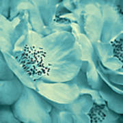 Whispers Of Teal Roses Poster
