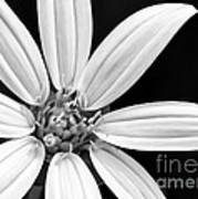 White And Black Flower Close Up Poster