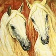 White Arabian Horses Poster